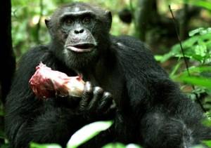 Scimmie da cui discendiamo